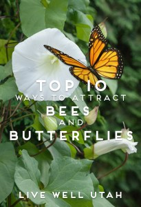 Top 10 Ways to Attract Bees