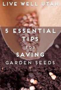 Saving Garden Seeds