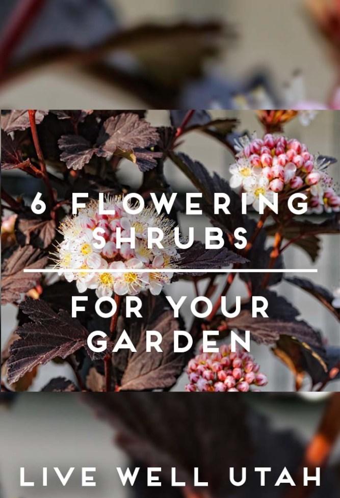 Flowering Shrubs