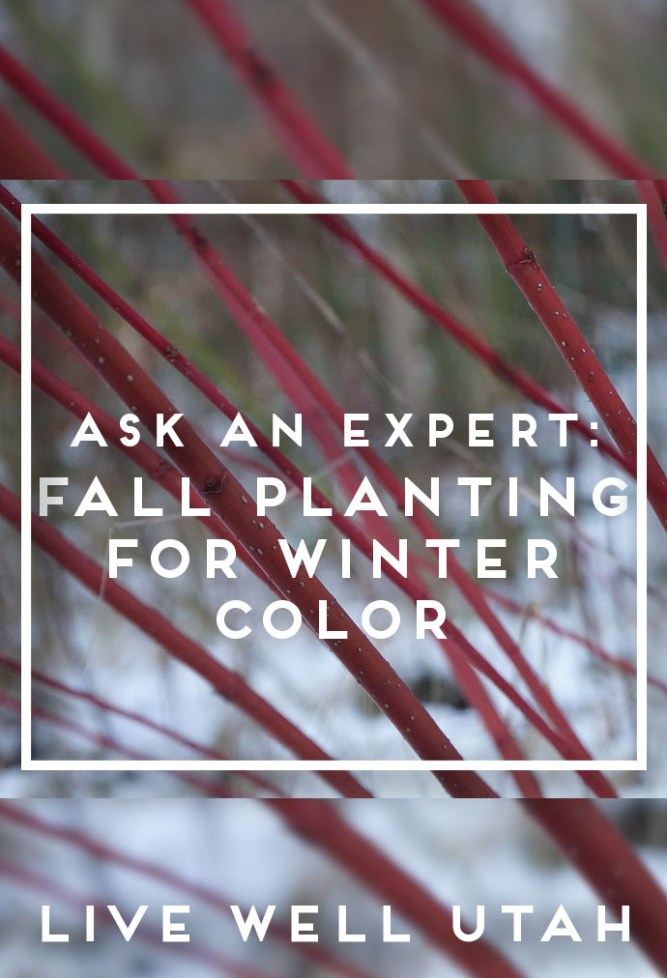fall-planting-for-winter-color