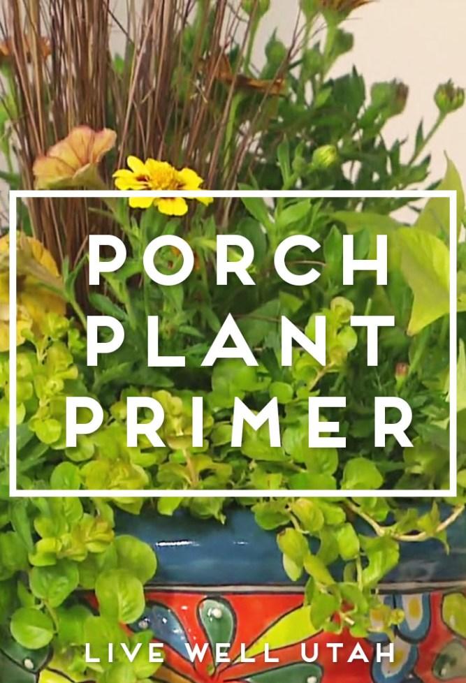 Porch Plant Primer
