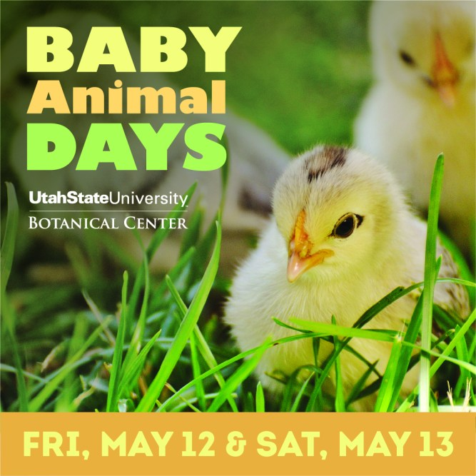 Baby Animal Days Blog Image
