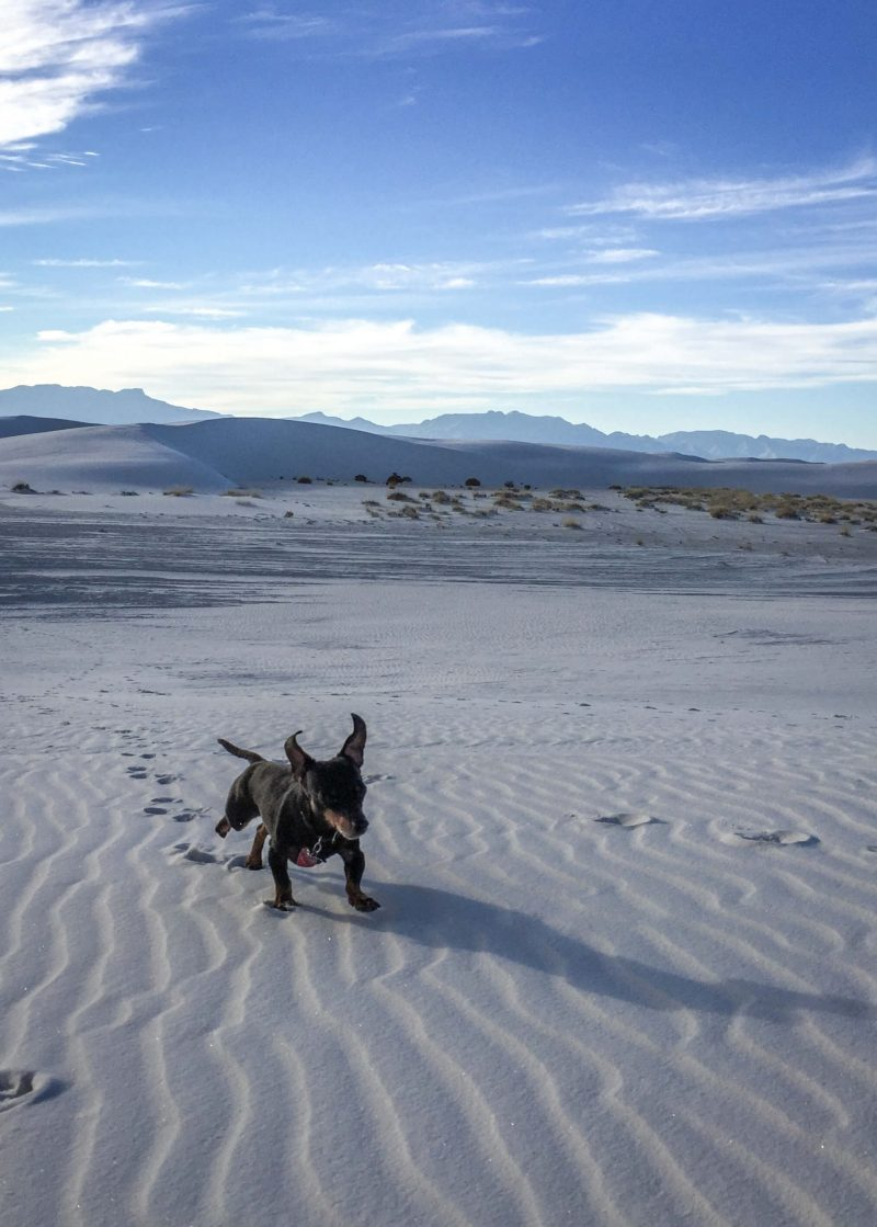 Running in White Sands, probably yapping. November 2014