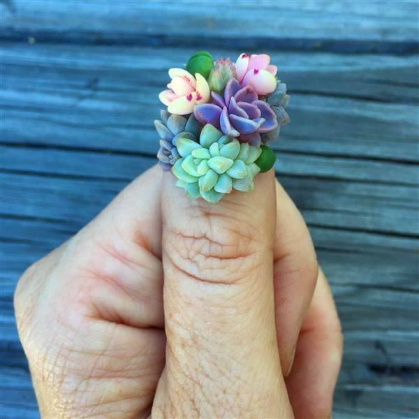 http://www.today.com/style/succulent-nails-are-latest-nail-art-trend-t104386