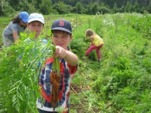 Children help with gleaning