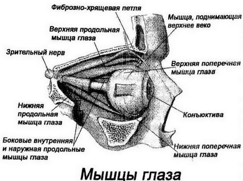 Метод жданова лечение глаз. Очки больше не понадобятся! Эффективное восстановление зрения по методу профессора Жданова