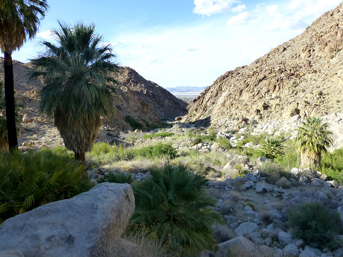 View from the 49 Palms Oasis