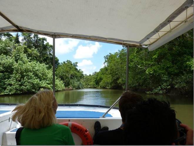 daintree_river_boat_tour.jpg