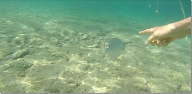 cozumel snorkeling 1