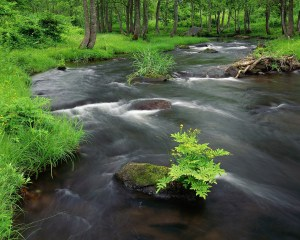 Stream Cascading Through Lush Forest