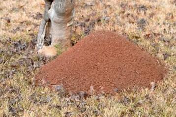 Ant Mound