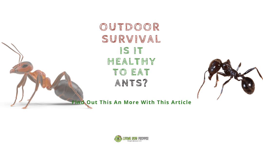 Is It Healthy To Eat Ants?