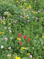 JadeLakeWildflowers0817_5