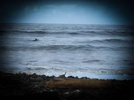 swimmer offshore