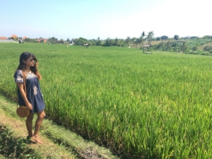 Rice-fields-Canggu