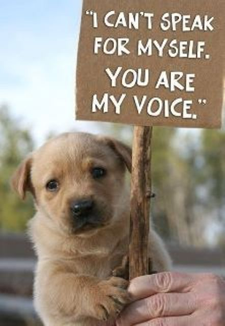 Raising our voices to protect and defend all animals everywhere.