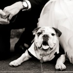 Wedding Wednesday – Dapper Dogs