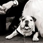 Wedding Wednesday – Dapper Dogs