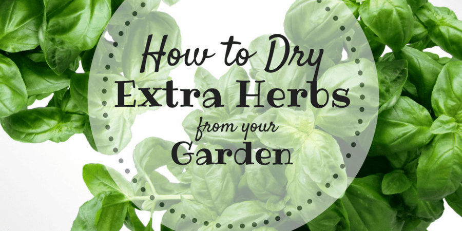 How to Dry Herbs from Your Garden