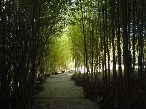 Bamboo Pathway