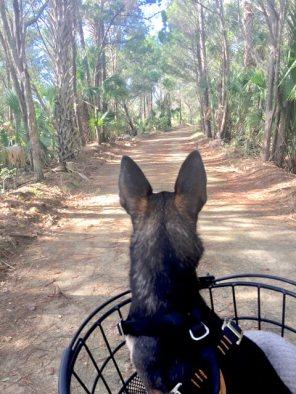 Pico heard a wild pig
