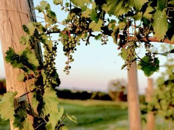 Wilde Prairie Winery