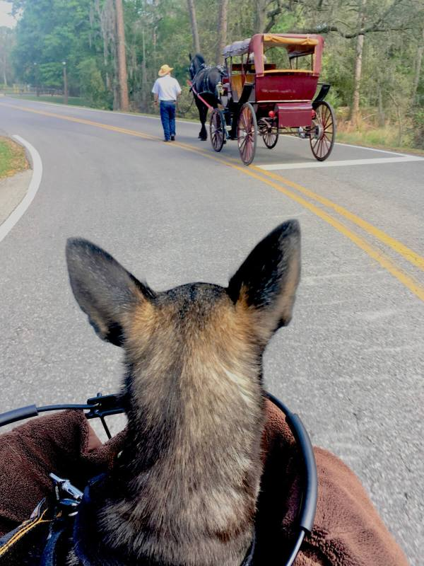 Disney's Fort Wilderness campground horse drawn carriage