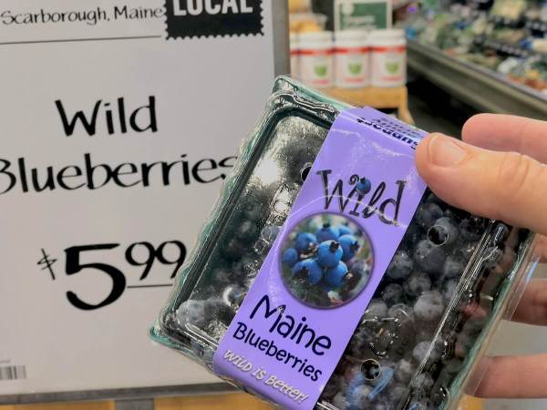 maine blueberries