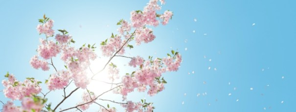 Blue background sky with sunlight and a tree with pink flowers