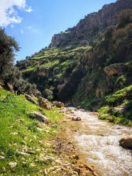 Mountains, trees and water in Norther Jordan