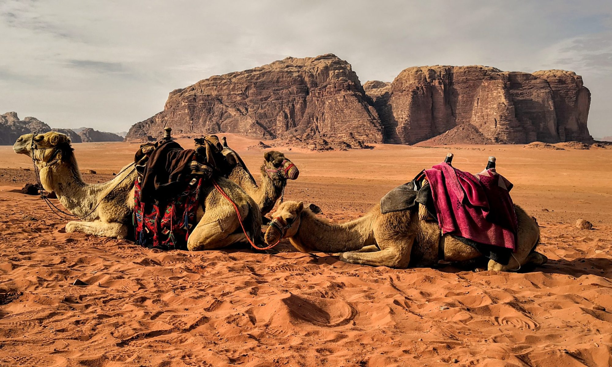 Two Camels in front of rock formation in Wadi Rum, Jordan