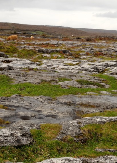 the Burren landscape-lost of limestone