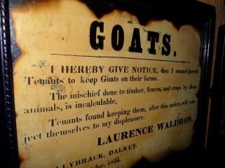 No more goats