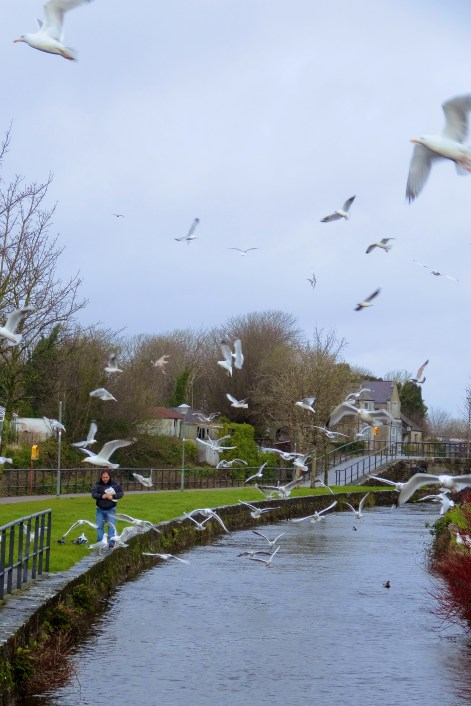 Galway Gulls