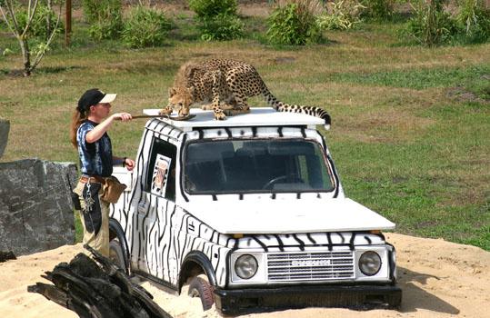 Gepardenanlage Safaripark Stukenbrock