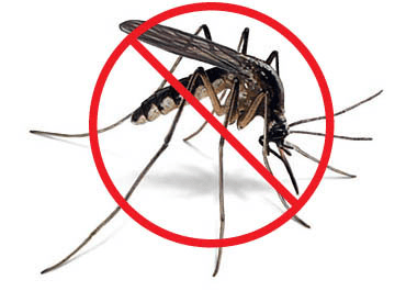 mosquitoes Puerto Rico