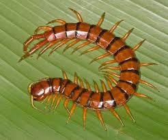 Eeek! Bugs, Creepy Crawlies and More in PR | Living in