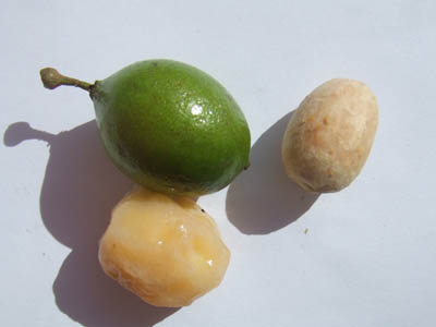 Quenepa fruits