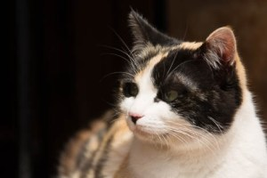 Tortie kitten in window