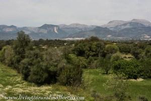 Rural Mallorca from near Costitx.