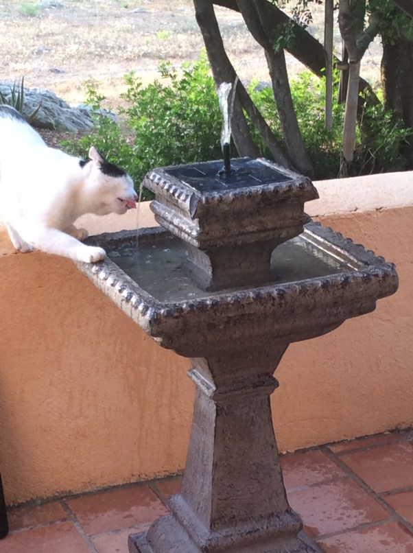 Cats need water.