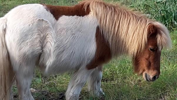 Pony in a field
