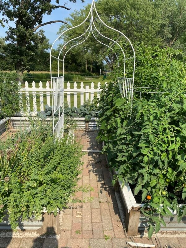 Raised bed garden with a wire trellis that was made by my handy husband