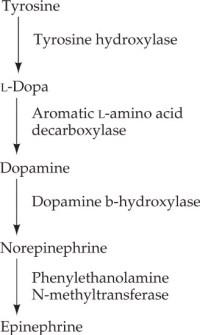 Catecholamine synthesis
