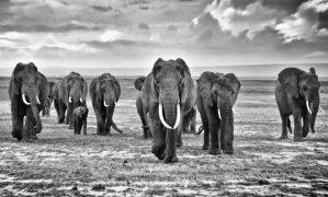 Walk Among Giants