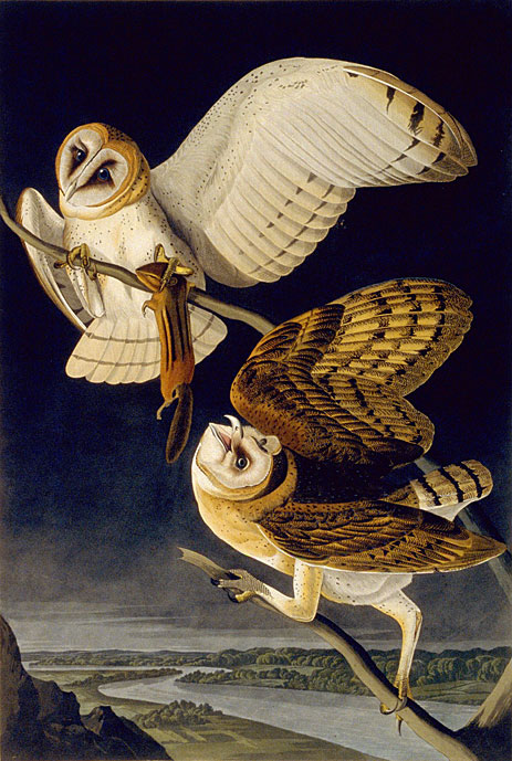 Owl of the Celts: Ancient Bride of the Dead