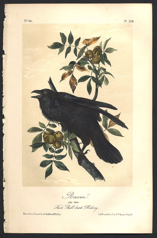 The Raven And Crow Of The Celts Part I Myth And Legend Living