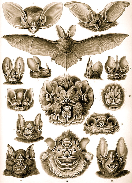 Bat in Celtic Folklore