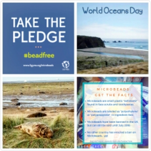 30 Days Wild- Day 8: World Oceans Day