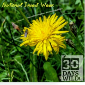 30 Days Wild – Day 21: Urban Nature